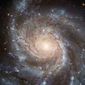 Hubble's Largest Galaxy Portrait